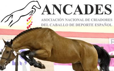 La final ANCADES 2020, en el Club Hípico Astur